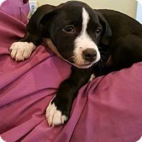 Adopt A Pet :: Tyronne - Waldorf, MD