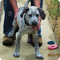 Adopt A Pet :: Awesome - Lincolndale, NY