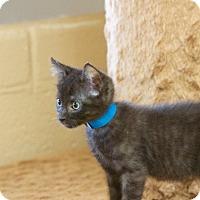 Adopt A Pet :: Wilhelm - Chula Vista, CA