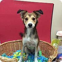 Adopt A Pet :: Serena - Decatur, AL