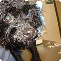 Adopt A Pet :: Frieda - Raleigh, NC