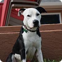 Adopt A Pet :: Finn - Tampa, FL