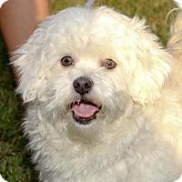 Adopt A Pet :: Carlos - Brunswick, ME