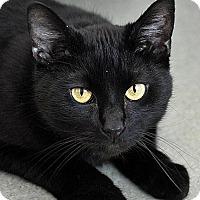 Adopt A Pet :: Zeke - Fort Leavenworth, KS