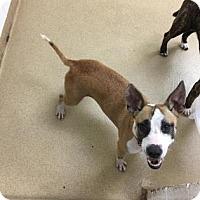 Adopt A Pet :: S/C Krissy - Miami, FL