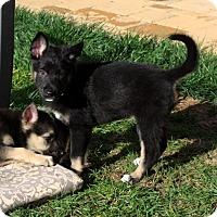 Adopt A Pet :: Alfonse - Downey, CA