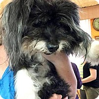 Adopt A Pet :: Betty - Boca Raton, FL