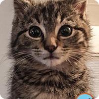 Adopt A Pet :: Bertram - South Bend, IN