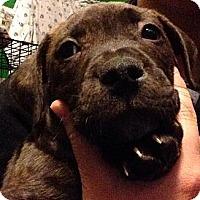 Adopt A Pet :: Kiara - River Falls, WI