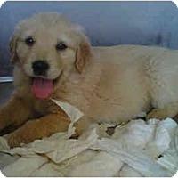 Adopt A Pet :: Emmerson - Cumming, GA