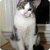 Adopt A Pet :: Neptune - Farmingdale, NY