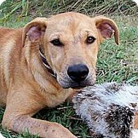 Adopt A Pet :: ARLO - Glastonbury, CT