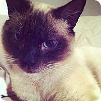 Adopt A Pet :: *Leopold - Winder, GA