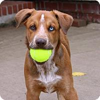 Adopt A Pet :: Jasper - Hillsboro, IL
