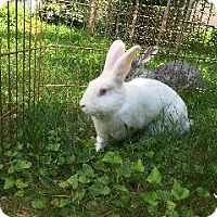 Florida White Mix for adoption in Woburn, Massachusetts - Jared