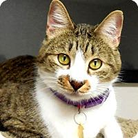 Adopt A Pet :: Adam - Tulsa, OK