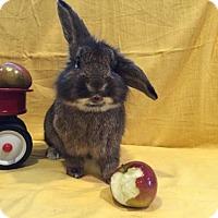 Adopt A Pet :: Herbie - Columbus, OH