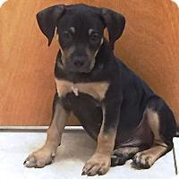 Adopt A Pet :: Kyle - Ft. Lauderdale, FL
