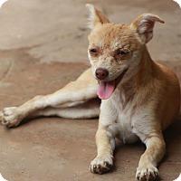 Adopt A Pet :: Boston - Norwalk, CT