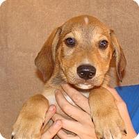Adopt A Pet :: Wizard - Oviedo, FL