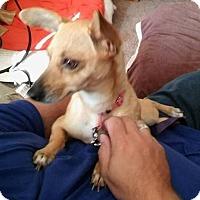 Adopt A Pet :: Ava - Elyria, OH