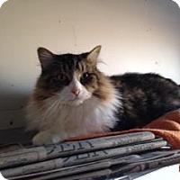 Adopt A Pet :: Desmond - Indianapolis, IN