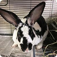 Adopt A Pet :: Daphne - Edinburg, PA