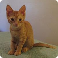 Adopt A Pet :: SKIP - Bronx, NY