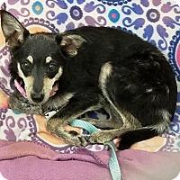 Adopt A Pet :: Serendipity - Kalamazoo, MI