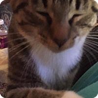 Adopt A Pet :: Tootsie - Caro, MI