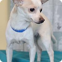 Adopt A Pet :: Boogeyman - Waldorf, MD