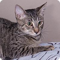 Adopt A Pet :: Abibail - Elmwood Park, NJ