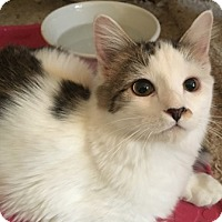 Adopt A Pet :: Lolo - Gilbert, AZ