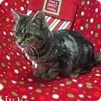 Adopt A Pet :: Lydia - Harrisville, WV