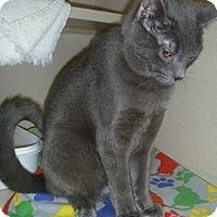 Adopt A Pet :: Sterling - Hamburg, NY