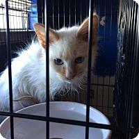 Adopt A Pet :: Beast - Helotes, TX