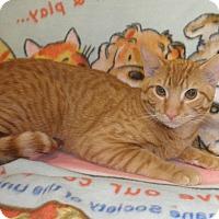 Adopt A Pet :: Wyatt O'Brian - Highland Park, NJ