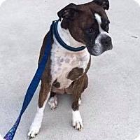 Adopt A Pet :: Zoie - Newfield, NJ