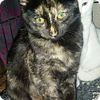 Adopt A Pet :: Dutchess - Levelland, TX