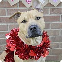 Adopt A Pet :: Graham - Germantown, TN