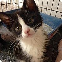Adopt A Pet :: Cupid - River Edge, NJ