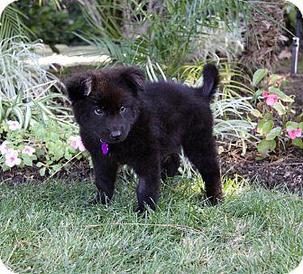 KENDRYK | Adopted Puppy | Newport Beach, CA | Border ...