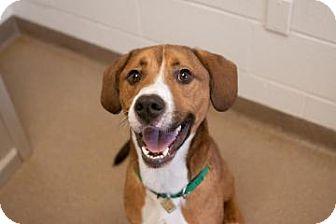 Hound (Unknown Type) Mix Dog for adoption in Novelty, Ohio - Travolta