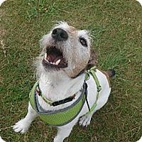 Adopt A Pet :: C.J. - Thomasville, NC