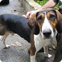 Adopt A Pet :: Bobo - Staunton, VA