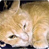 Adopt A Pet :: Ramon - Medway, MA