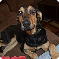 Adopt A Pet :: Barley - Marietta, GA
