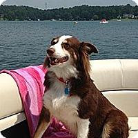 Adopt A Pet :: Georgia - Savannah, GA