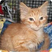 Adopt A Pet :: Mufasa - Acme, PA