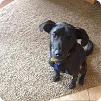 Adopt A Pet :: Troy - La Crosse, WI